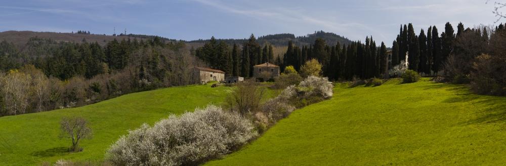1-2-3 Maggio 2015: Workshop di Erboristeria  - Le  piante officinali spontanee in Toscana