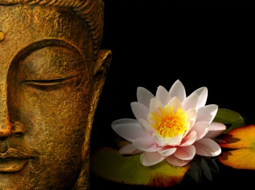 buddha-wallpapers-photos-pictures-h2o-lily[1]