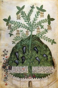 taccuinum sanitatis. il potere curativo delle piante