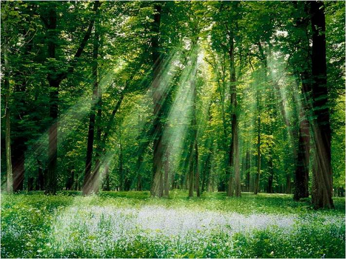 Immagine energia piante